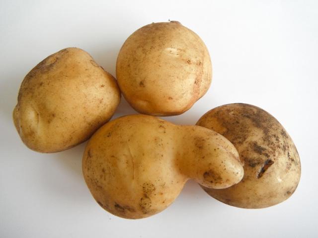 鹿児島の無農薬・減農薬栽培 じゃが芋 400g~【1kg】