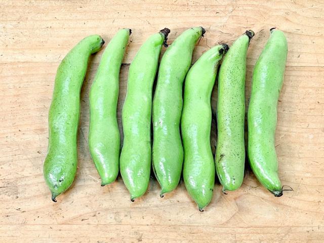 農薬不使用 そら豆 (約7本 220g~)【0.4kg】