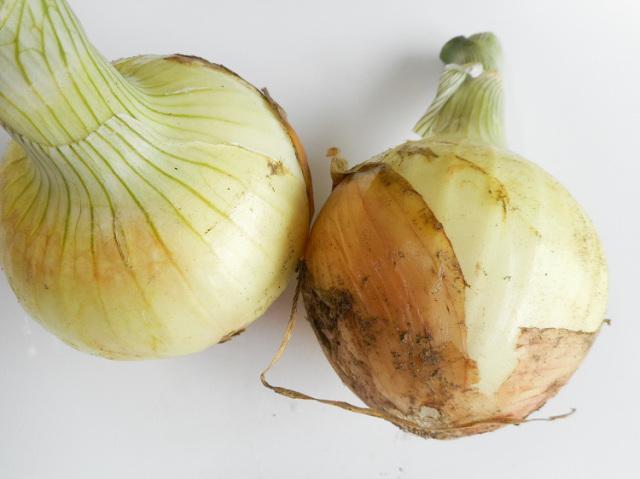 農薬不使用・化学肥料不使用の新玉ねぎ 400g~【1kg】