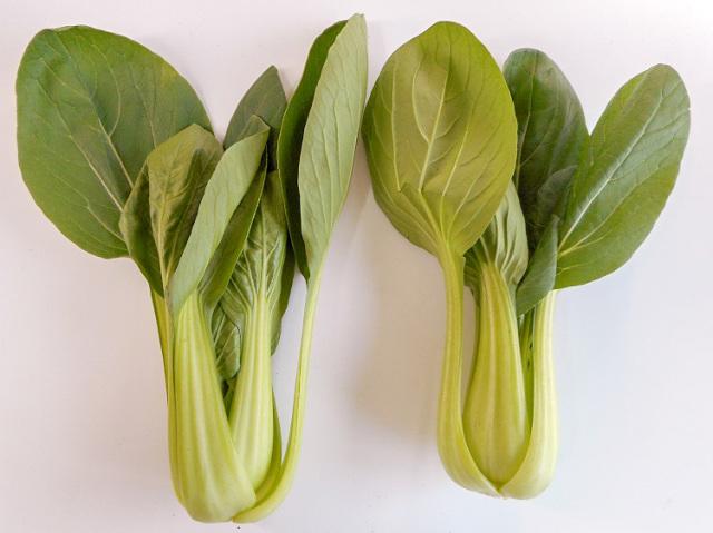 九州産チンゲン菜(市場野菜)【0.3kg】