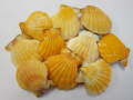 ビクセロム オレンジ両面-小-【約3~5cm/10個】[メール便可-2袋まで]