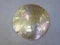 シロチョウガイ(円形カット)【約11〜12cm/1枚】貝 貝殻 シェル 二枚貝 ブライダル マリン ハワイアン