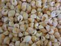 ナサリウスポリドス オレンジ【約1.0〜1.5cm/100g】[メール便可-4袋まで]