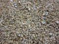 天然星の砂(無漂白)【約1~3mm/約100g】 [メール便可-6袋まで]