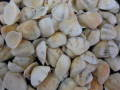 サンカクアサリ【約1.5~2.5cm/100g】[メール便可-3袋まで]