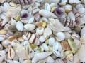 ミックスシェル【約1.5〜4.5cm/5kg】貝殻・貝・シェル