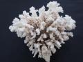 天然珊瑚-210-【約24cm/約1725g】現品