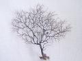 ウミウチワ-3107-【横約21cm/縦約19cm/1本】(現品)