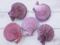 ヒオウギガイ両面-紫系-【約7~9cm/5個入】