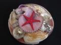貝殻詰め合わせ-シェルパック-【貝皿の大きさ約8~10cm/12個】1セット限り