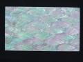 貝殻シート(ミミガイ ホワイト)【シートサイズ14cm×24cm 厚さ0.18mm-0.2mm 】