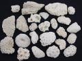 サンゴ石【約3~7cm/約500g】