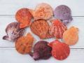 ヒオウギガイ赤系・紫系両面ミックス【約4~5cm/10個入】[メール便可-4袋まで]