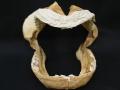 サメの顎 (国内産)【縦約28cm 横約34cm 高さ約27.5cm 重量約1KG/1個/現品】