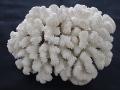 天然珊瑚-9-【縦約14cm横約25cm/約1600g】現品