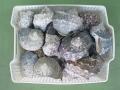 夜光貝5kg詰合せ(ミックスサイズ)100g~400g程度のミックス(参考:17~20個程度)