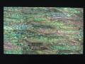 貝殻シート#4(ニュージーランドアバロン(パウアシェル))【シートサイズ14cm×24cm 厚さ0.18mm-0.2mm 】