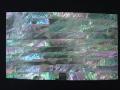 貝殻シート#15(オーストラリアアバロン)【シートサイズ14cm×24cm 厚さ0.18mm-0.2mm 】