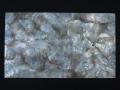 貝殻シート#20(ブラックリップ(クロチョウガイ))【シートサイズ14cm×24cm 厚さ0.18mm-0.2mm 】