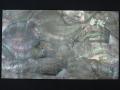 貝殻シート#23(ブラックリップ(クロチョウガイ))【シートサイズ14cm×24cm 厚さ0.18mm-0.2mm 】