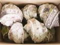 夜光貝20kg詰合せ(ミックスサイズ)1200g以上のミックス(参考:13~15個程度)