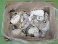 牡蠣殻(カキ殻)【約5kg】【約8~15cm】