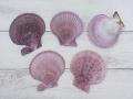ヒオウギガイ片面-紫系-【約6~8cm/5枚入】[メール便可-6袋まで]