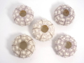 シーウーチンスプートニック小【約5〜6cm/5個入】貝 貝殻 シェル ウニ ランプ LED エアープランツ ハンドメイド