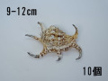 スイジガイ(水字貝)小【約9〜12cm/10個】