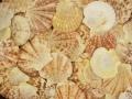 サンセットシェル【約5〜6cm/500g】貝 貝殻 シェル マリン ハンドメイド ウエディング アクセサリー DIY 二枚貝