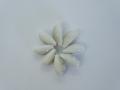 ■メール便可(6袋まで)■マニータグリーンリング(約3〜3.5cm/10個入)貝殻・貝・シェル・ハンドメイド・バックチャーム・シェルリング