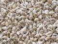 ■メール便可(1袋まで)■ナサシェルツヤ出し-大-【約1.0〜1.8cm/500g】貝 貝殻 シェル マリン ハンドメイド ウエディング アクセサリー DIY