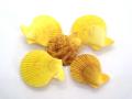 ヒオウギガイ両面-黄色-【約4〜5cm/5個入】[メール便可-6袋まで]