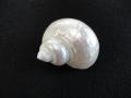 ターボブロゴス真珠磨き【約6~7cm/1個】
