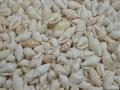 ■メール便可(5袋まで)■ナサクックドホワイト自然【約1.0〜1.5cm/100g】貝 貝殻 シェル 小さな貝 ハンドメイド フォトフレーム アクセサリー デザイン