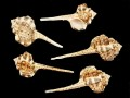 サツマツブリ【約7〜9cm/5本入】貝 貝殻 シェル 巻貝 インテリア ハンドメイド マリン ハワイアン