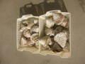 タカセ貝10kg詰合せ(原貝・ミックスサイズ)