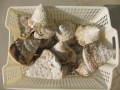 タカセ貝5kg詰合せ(原貝・ミックスサイズ)