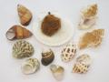 ヤドカリの中学校【約3〜7cm】貝 貝殻 シェル 小屋 ハウス 海 マリン  ビーチ ヤドカリ