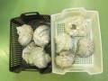 夜光貝5kg詰合せ(ミックスサイズ)400g~1kgのミックス(参考:9個前後)