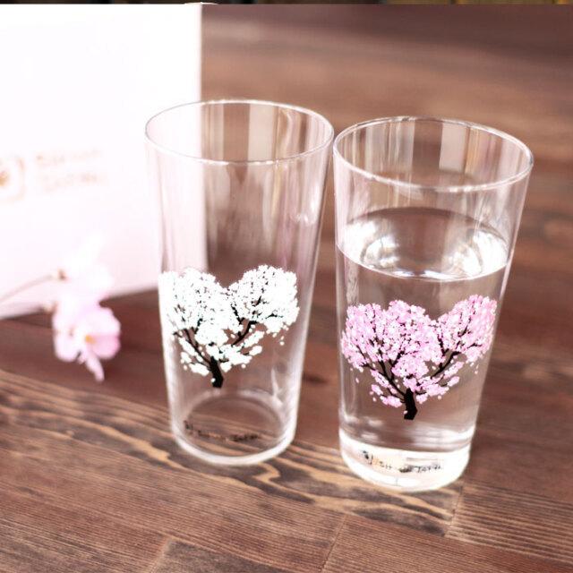 冷感桜 タンブラー ペアセット 箱入 / 丸モ高木陶器