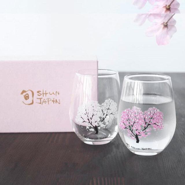 冷感桜 フリーグラス ペアセット 箱入 / 丸モ高木陶器