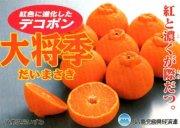 鹿児島デコポン【大将季】 3kg 8玉〜10玉詰
