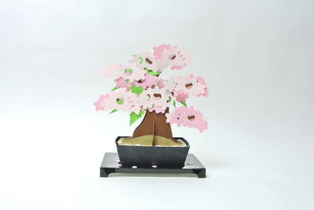 kami-bonsai 桜