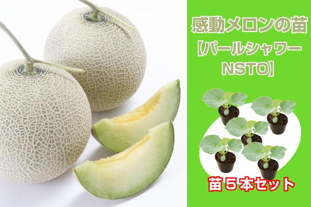感動メロンの苗 5本セット【パールシャワーNSTO】(緑肉系)