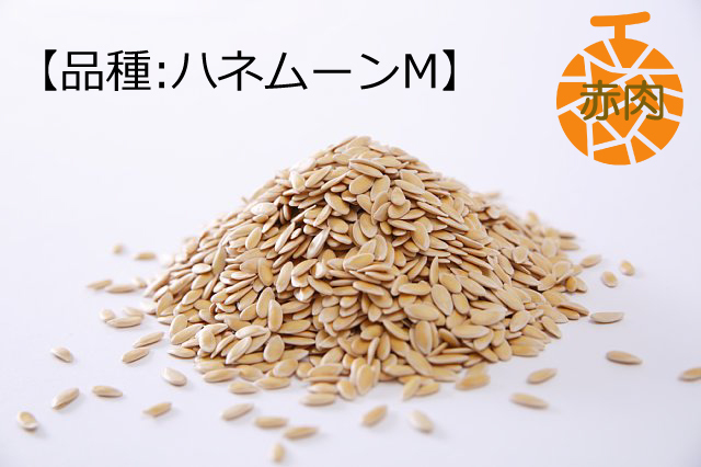 感動メロンのタネ 【ハネムーンM】(赤肉系)