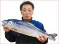 2018-46 時しらず1尾(北海道道東産・生冷凍(無塩)3.1kg〜)