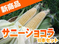 D-461 【送料無料】北海道朝もぎスイートコーン『サニーショコラ』