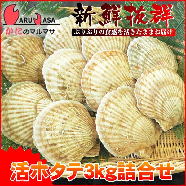 [かにのマルマサ]活ほたて貝3kg[12-18枚]北海道産 活ホタテ[活帆立貝] お中元 ギフト