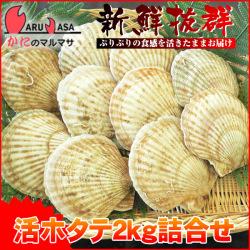 [かにのマルマサ]活ほたて貝2kg[8-12枚]北海道産 活ホタテ[活帆立貝] お中元 ギフト